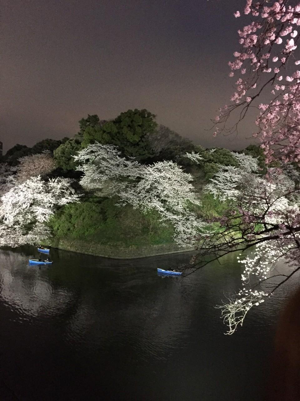 スタッフブログ:飯田橋周辺の桜